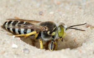 Методы борьбы и защиты от укусов насекомых